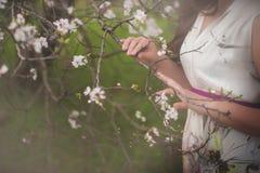 Piękne kobiet ręki i kwiatonośni drzewa Zdjęcie Royalty Free
