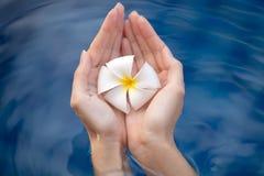 Piękne kobiet ręki trzyma kwiatu Obraz Royalty Free