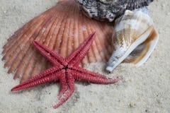 Skorupy i rozgwiazda na plaży fotografia royalty free