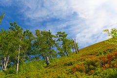 piękne krajobrazowe góry Kniaź Carpathians, Europa Fotografia Royalty Free