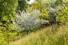 Piękne kwiatonośne sad łąki w wiośnie Backlit fotografia obraz royalty free