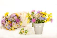 piękne kwiaty łąkowi Zdjęcia Royalty Free