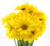 piękne kwiaty żółte Obrazy Royalty Free