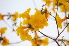 piękne kwiaty żółte Zdjęcie Stock