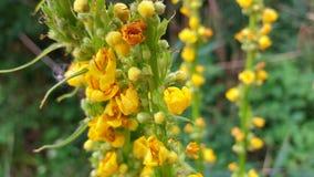 piękne kwiaty żółte Zdjęcia Royalty Free