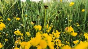 piękne kwiaty żółte zbiory