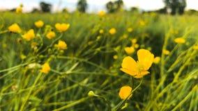 piękne kwiaty żółte zdjęcie wideo