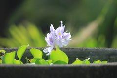 piękne kwiaty obrazy stock