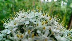 piękne kwiaty, białe Obrazy Royalty Free