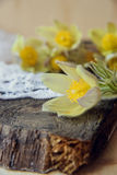 piękne kwiaty Marzec 8 kobiet dnia karta Bukiet śnieżyczki na drewnianym tle Fotografia Royalty Free