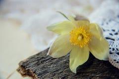 piękne kwiaty Marzec 8 kobiet dnia karta Bukiet śnieżyczki na drewnianym tle Zdjęcia Royalty Free