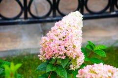 piękne kwiaty natura Moscow regionu lato 2018 posada Rosji sergiev klasztoru st sergius trójca Turystów miejsca w Rosja fotografia royalty free