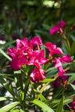 piękne kwiaty purpurowych zdjęcia royalty free