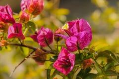 piękne kwiaty purpurowych zdjęcie stock