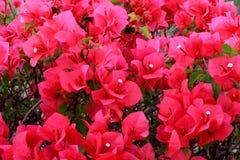 piękne kwiaty z fotografii bardzo Zdjęcia Stock