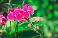 Piękne kwitnące orchidee w lesie Zdjęcie Stock