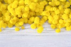 Piękne mimozy kwitną kwiat na białym drewnianym tle 8 karciany eps kartoteki powitanie zawierać szablon Płytka głębia kosmos kopi Obrazy Stock