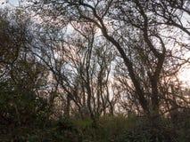 Piękne nagie gałąź w zmierzchu zaświecają jesień kraju Fotografia Royalty Free