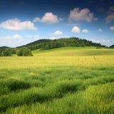 piękne niebieskie niebo meadow Obraz Royalty Free