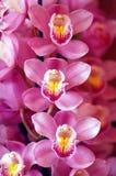 piękne orchidei menchie obraz stock