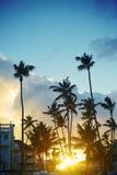 Piękne palmy na nieba tle Zdjęcia Royalty Free