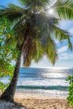 piękne plażowi palmy zdjęcia royalty free