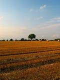 piękne pole middled upraw, zdjęcie royalty free