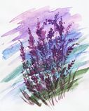 Piękne purpurowe akwareli plamy, lily obrazek ilustracji