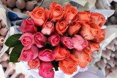 piękne róże Obrazy Royalty Free