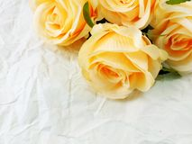 Piękne róże kwitną na papierowym tekstury tle z filtrami barwią i interliniują dla kopii Obrazy Stock