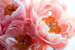 Piękne różowe peonie, kwiaty zdjęcie stock