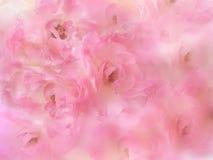 piękne różowe róże kwitną granicę z plamy tłem Obrazy Stock