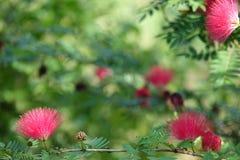 piękne różowy kwiat zdjęcia royalty free