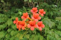 Piękne rośliny i kwiaty Zdjęcie Stock