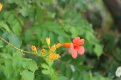 Piękne rośliny i kwiaty Fotografia Royalty Free