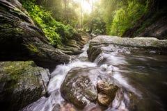 Piękne siklawy po środku lasu Zdjęcia Stock
