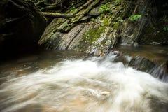 Piękne siklawy po środku lasu Fotografia Stock