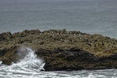 Piękne skał formacje z ptakami blisko Przyrodniej księżyc zatoki, Kalifornia obrazy royalty free