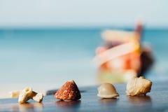 Piękne skorupy kłamają na stole na tła błękita morzu Skorupa korale i mollusks Zdjęcia Stock