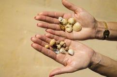Piękne skorupy na rękach. Wakacje w Kuba, Karaiby plaża Obraz Stock