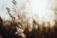 Piękne spokojne płochy kiwa w słońcu zdjęcie stock