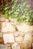 Piękne tło ściany, rośliny i Fotografia Royalty Free