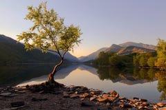 Piękne Walijskie góry odbijać w wciąż nawadniają jeziorny Llyn Padarn przy Samotnym Drzewnym Llan Beris Walia zdjęcie stock