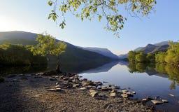 Piękne Walijskie góry odbijać w wciąż nawadniają jeziorny Llyn Padarn przy Samotnym Drzewnym Llan Beris Walia zdjęcie royalty free