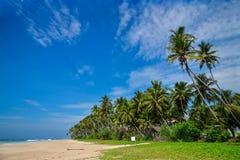 piękne wysp brytyjskich wysp raju piasku palm piaskowatych kawałki drzewa w kolorze turkusowym dziewica white wody Sri Lanka zdjęcia royalty free