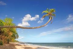 piękne wysp brytyjskich wysp raju piasku palm piaskowatych kawałki drzewa w kolorze turkusowym dziewica white wody Zdjęcie Royalty Free