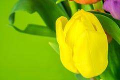 piękne zdjęcia tła zielony tulipan bardzo Obrazy Royalty Free
