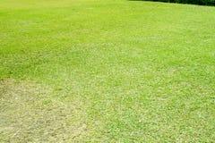 Piękne zielone łąki wokoło i drzewa zdjęcie stock
