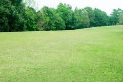 Piękne zielone łąki wokoło i drzewa obraz stock