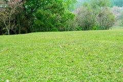 Piękne zielone łąki wokoło i drzewa fotografia stock
